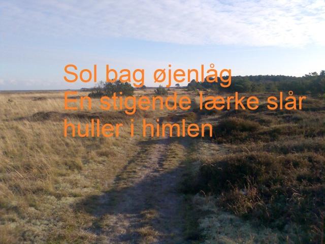 foto med haiku