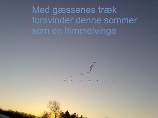 haiku med fugle